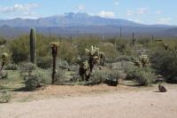 mc dowell Kaktus
