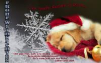 Weihnachtshund Kopie